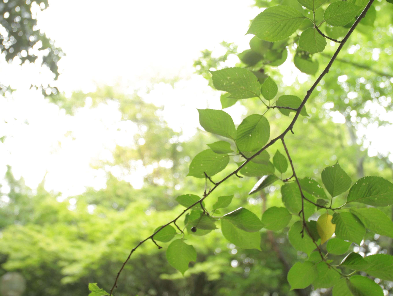 緑地イメージ